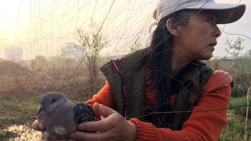 Chinese vigilantes combat wild bird poachers
