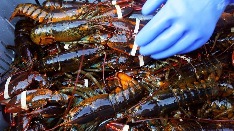 Chinese tariffs could hurt U.S. lobstermen