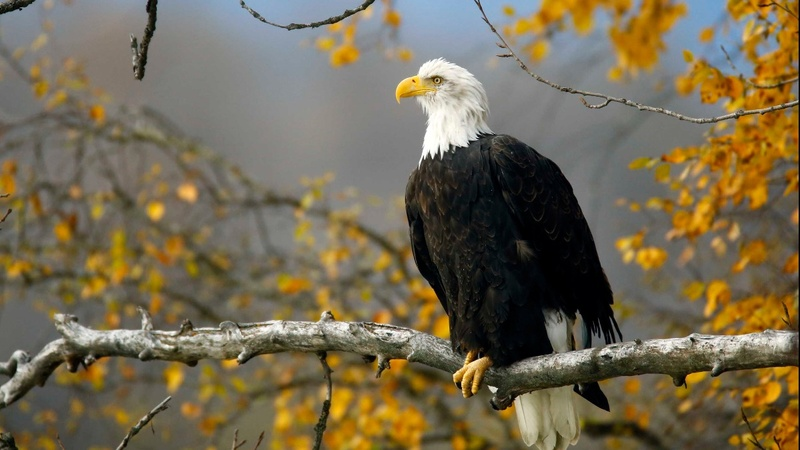 Trump admin eyes changes to Endangered Species Act