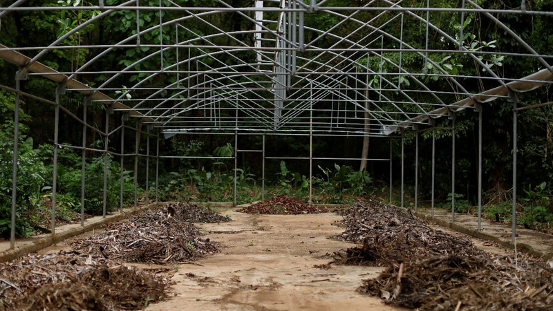 Victim of crisis: Caracas' dying botanical garden