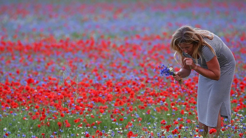 INSIGHT: Italian wild flowers erupt into bloom