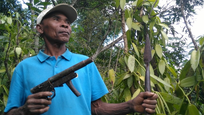 Why vanilla is risky business for Madagascar