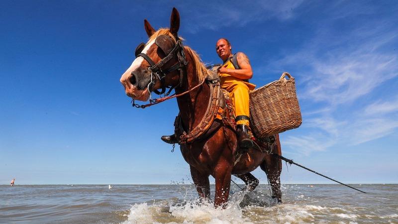 Climate change threatens horseback shrimpers