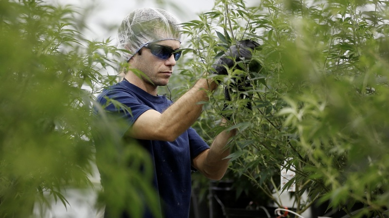 Corona owner raises weed bet with $4 billion investment