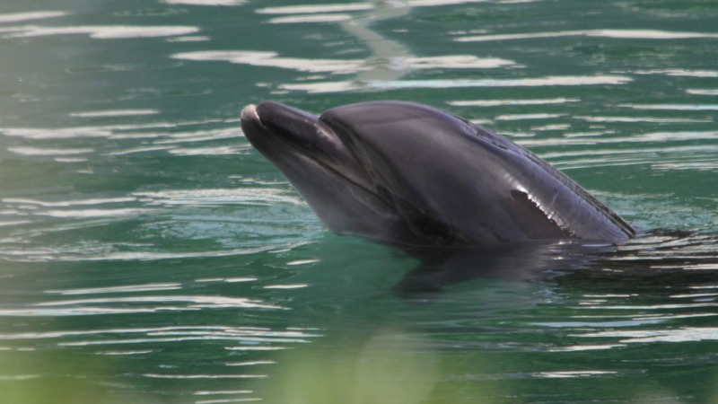 Japan's abandoned dolphin sparks outcry