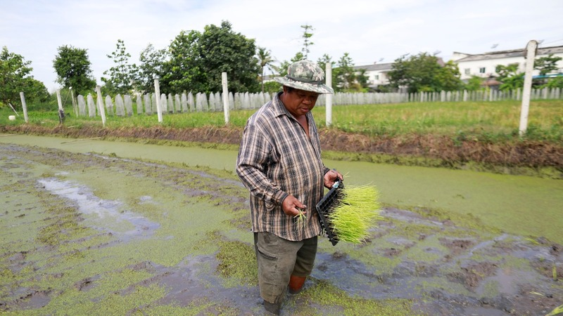 A defiant farmer holds out in booming Bangkok