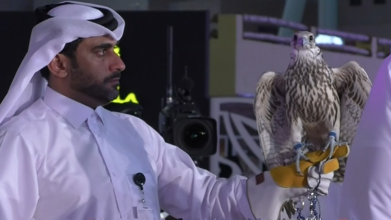 Prices soar for the perfect falcon in Doha