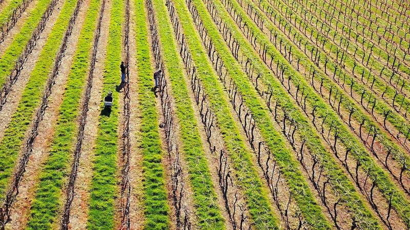 Australia's big dry could make a good vintage