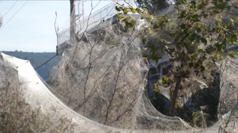 INSIGHT: Greek coast disappears under spiderwebs