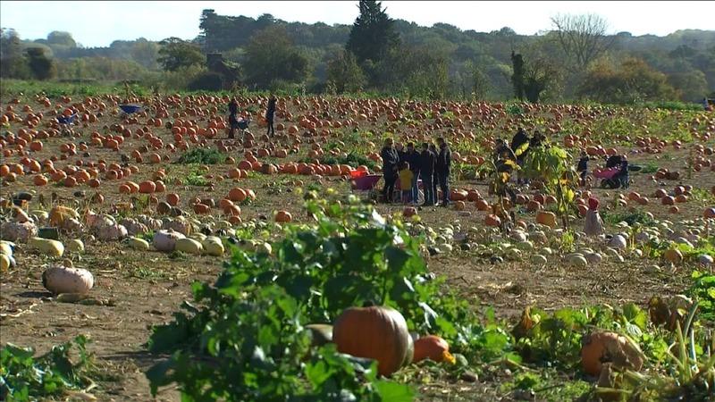 INSIGHT: Picking the perfect Halloween pumpkin