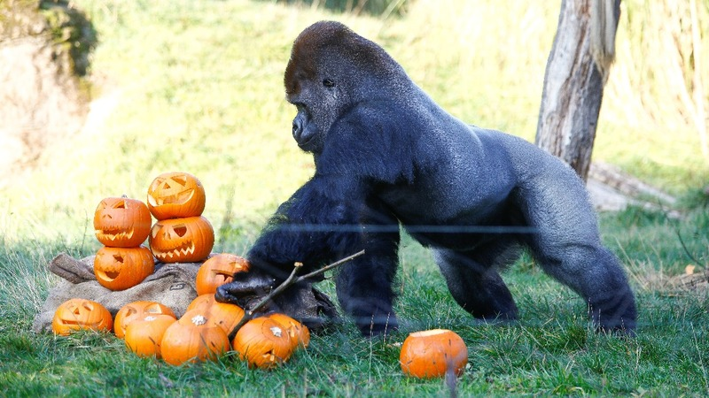 INSIGHT: Pumpkin party at London Zoo