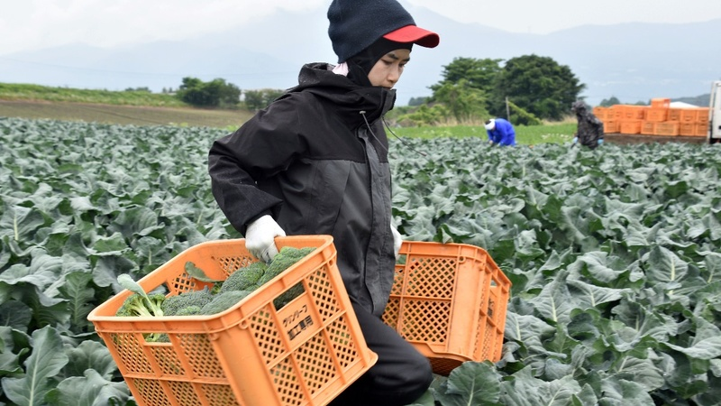 Japan gets ready to let in more foreign workers
