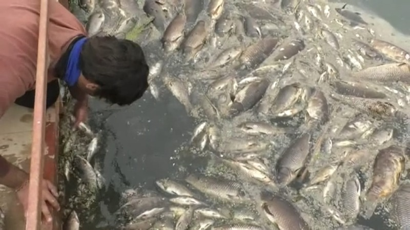 Thousands of tons of dead fish wash ashore in Iraq