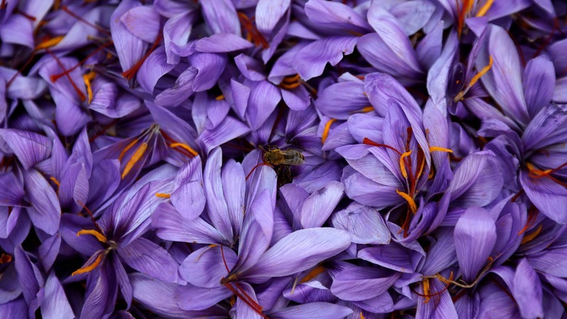 Saffron is 'red gold' for cash-strapped Greece