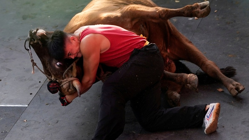 China puts a kung fu twist on bullfighting