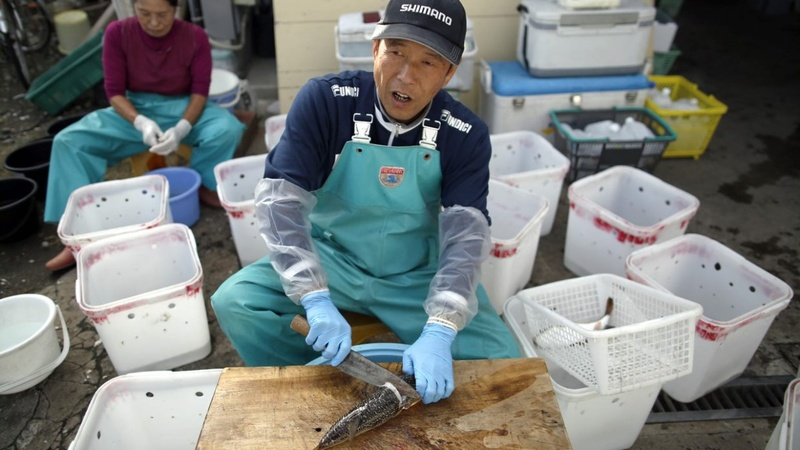 Japanese chefs grapple with hybrid pufferfish