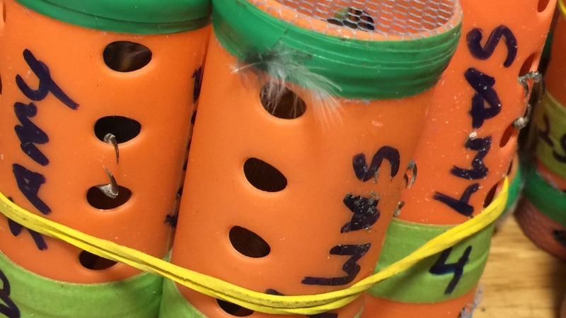 70 finches hidden in hair rollers smuggled into JFK