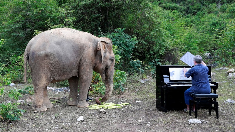 Pianist plays for rescued elephants in Thailand