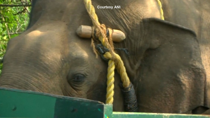 Officials capture killer elephant in India