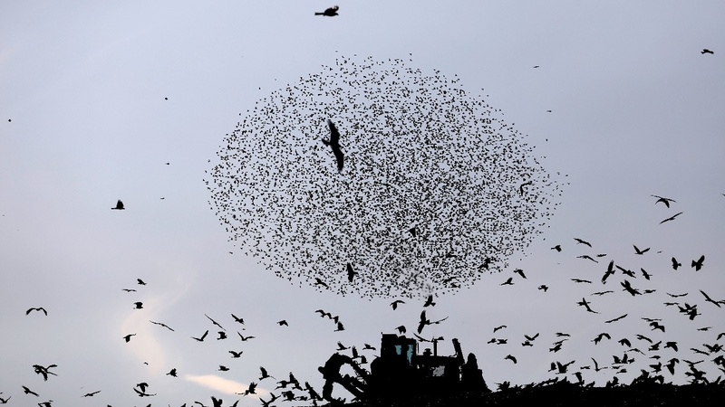INSIGHT: Migratory birds swirl in Israel's skies