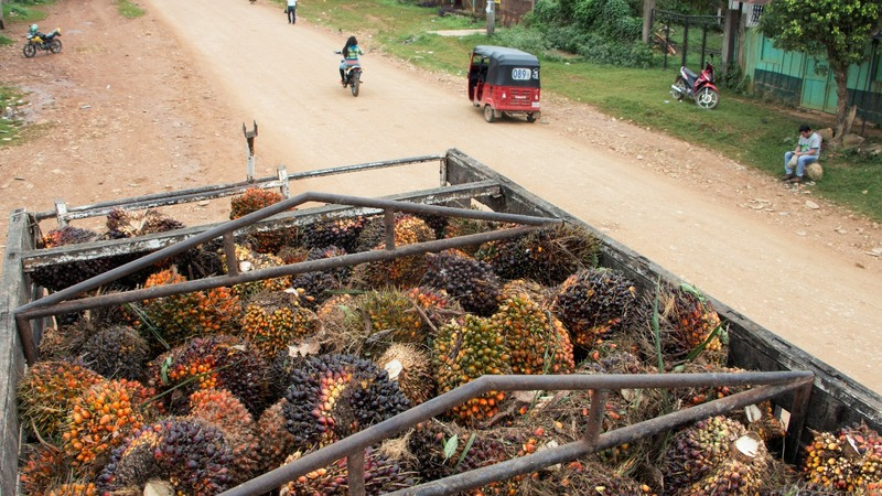 Guatemalan farmers struggle as palm oil industry booms