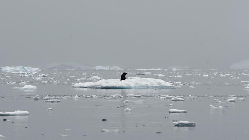 Antarctica's melt quickens, risks sea level rise