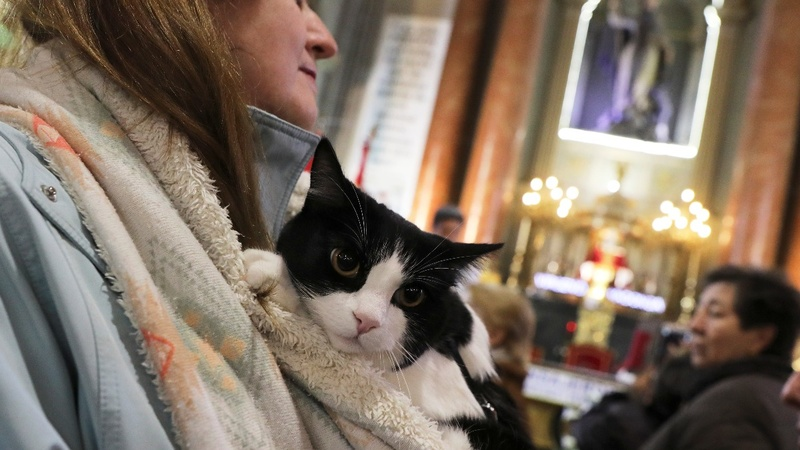 INSIGHT: Pets get blessed at Madrid church