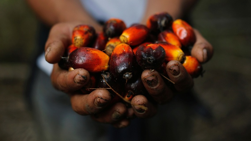Palm oil's PR battle turns to satellite imagery