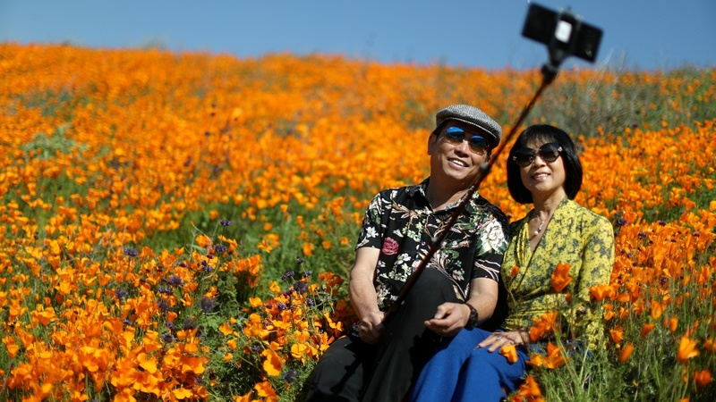 Super bloom of California poppies after heavy rains
