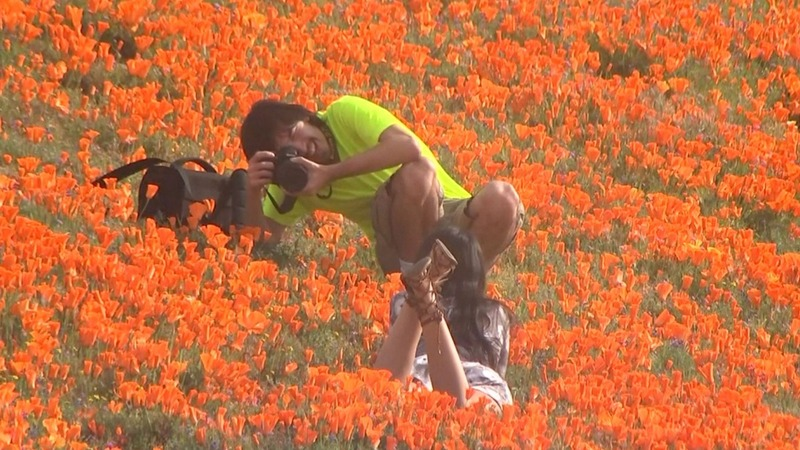 'Super Bloom' visitors told to keep off flowers