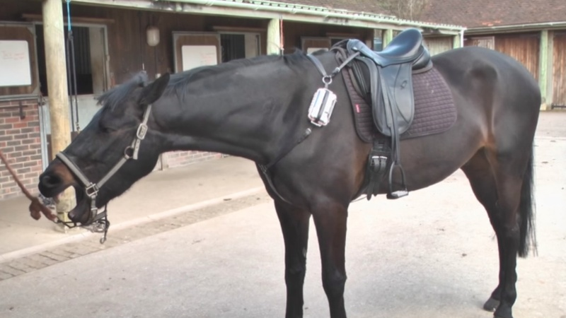 Fitbit-like device for horses aims to save lives