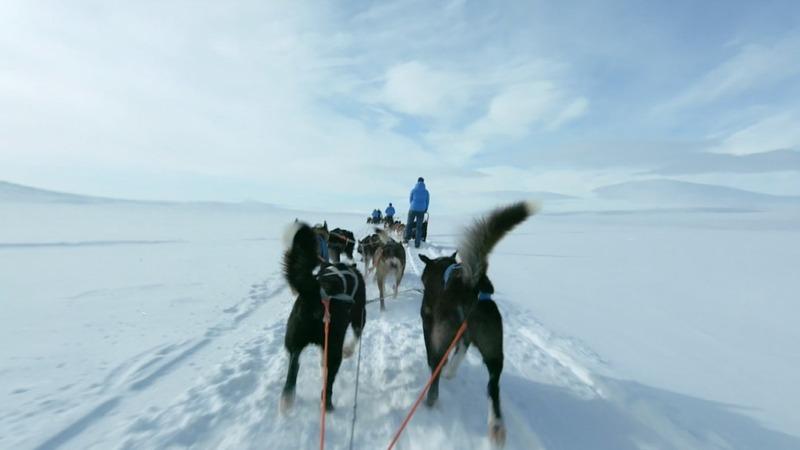 INSIGHT: Dog sledders race across Arctic tundra