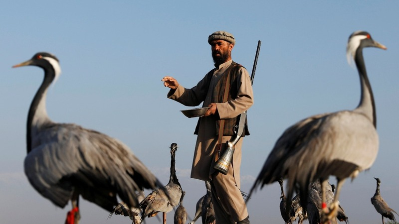 Afghan bird hunters carry on tradition amid chaos