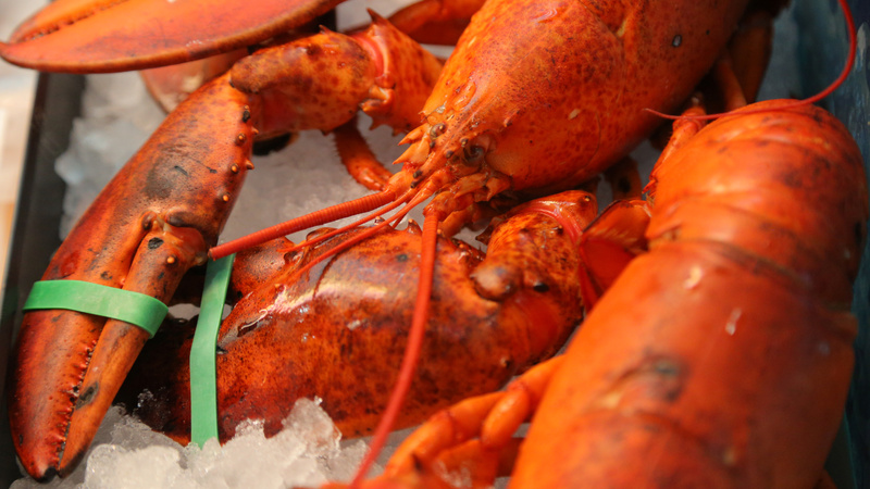 Homegrown lobster: the key to sustainable fishing?
