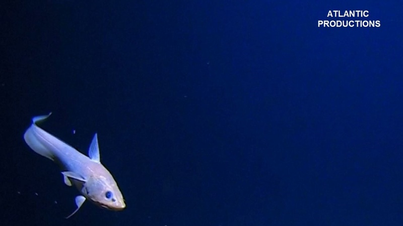 VERBATIM: Deepest-ever dive finds plastic