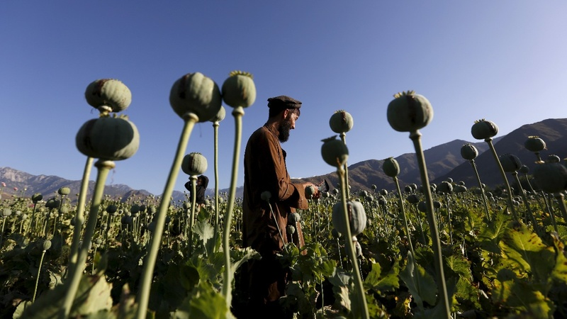 Afghanistan at risk of becoming a 'narco-state'