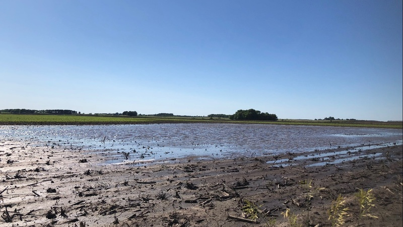 Midwest farmers struggle with a rainy season