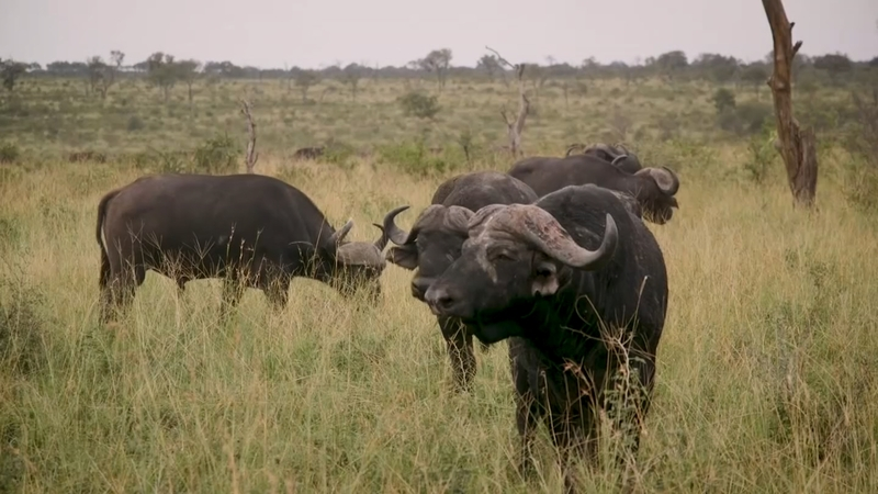 Game farming brings big business to South Africa