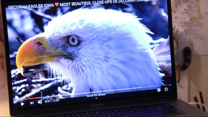 Bald eagles stir patriotism as web-cam stars - Reuters TV