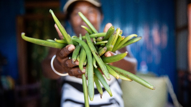 Madagascar's vanilla boom attracts villains