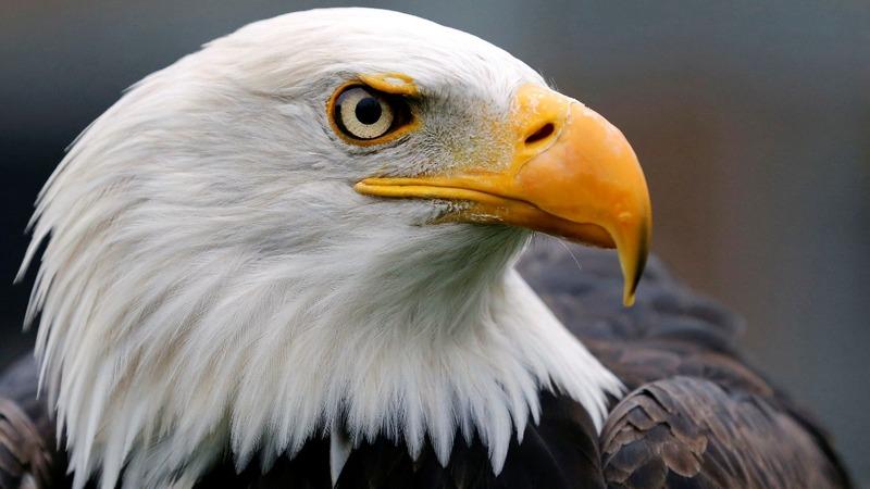 Trump weakens U S  wildlife protections law - Reuters TV
