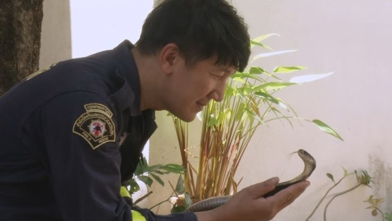 Thai firefighter finds solace in snake catching