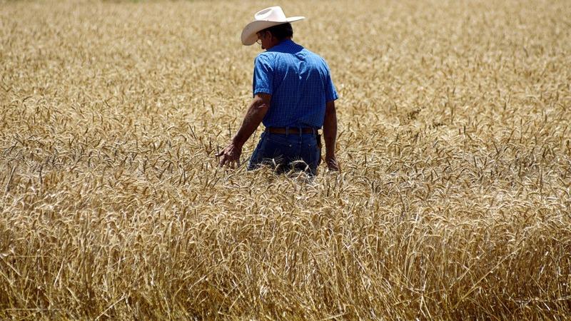 Dems seize on Farm Belt frustration with trade war