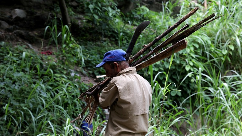 Venezuela's forests suffer as wood replaces scarce gas