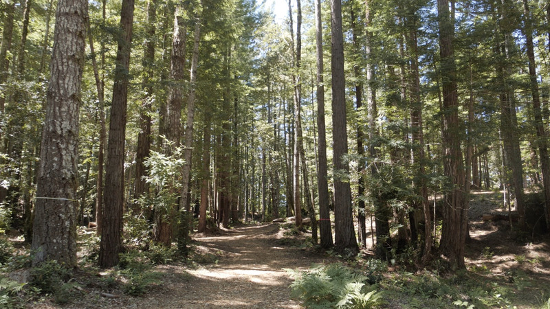 For $3,000, resting under a redwood for eternity