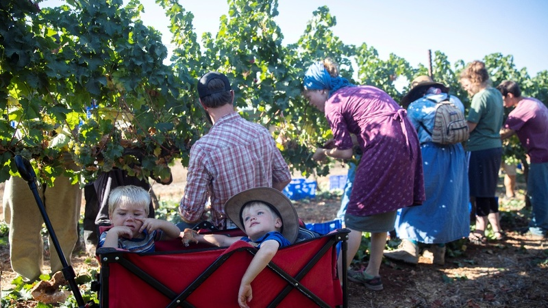 Evangelicals harvest land Israel hopes to annex