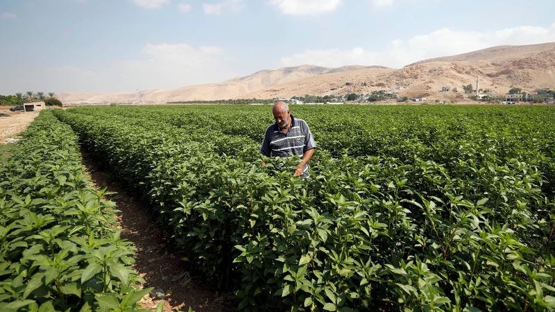 Palestinians vow to keep Jordan Valley land