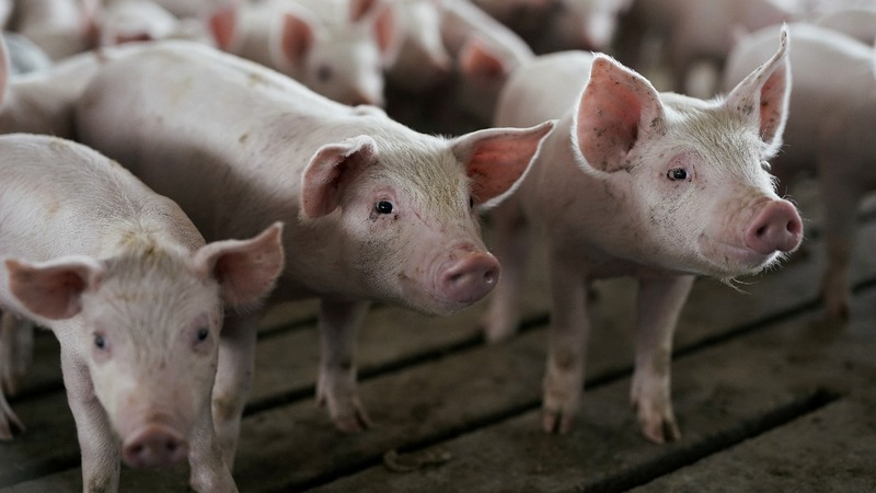China to exempt U.S. pork, soybeans from tariffs