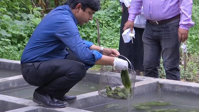 Algae filters make dirty water drinkable