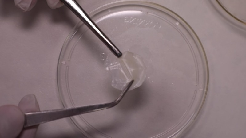 Scientists make human skin for cosmetics-testing
